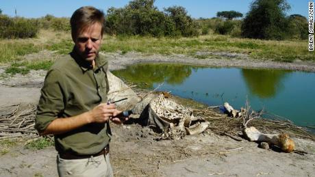 Kembalinya Botswana ke perburuan gajah tidak akan menyelesaikan masalah, kata mantan Presiden