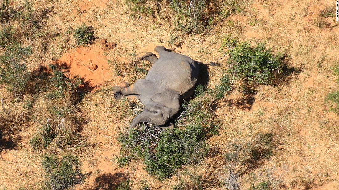 Botswana: Lebih dari 360 gajah mati karena sebab misterius