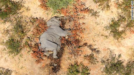 "Gambar yang diperoleh CNN menunjukkan banyak gajah berbohong ""datar di wajah mereka."""