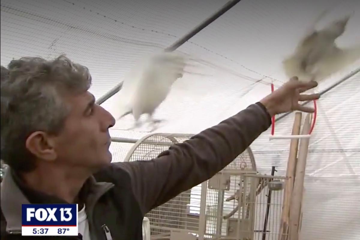 Pria Florida terjebak di properti dengan 200+ burung eksotis