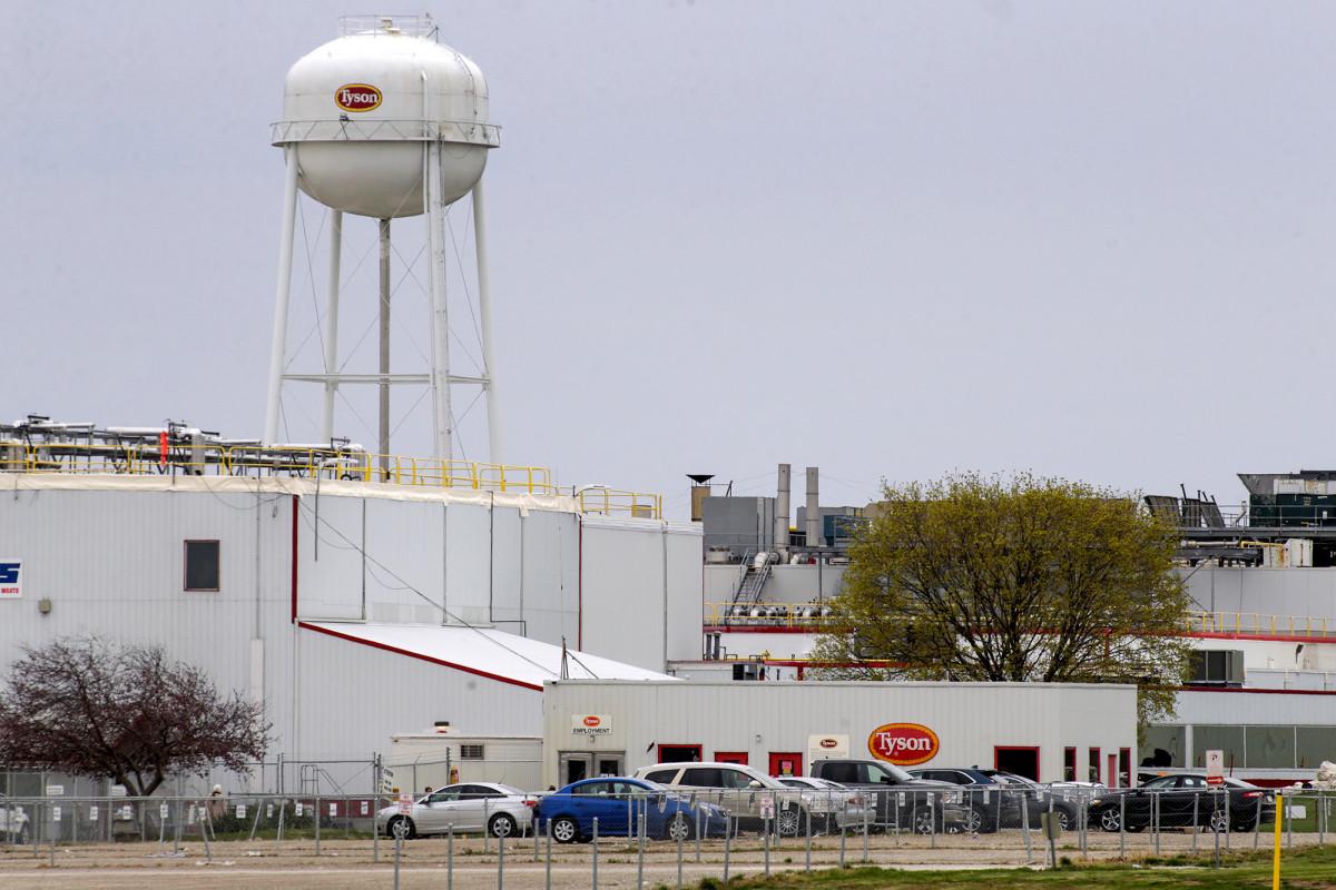 Wabah di pabrik babi Iowa lebih besar dari yang dilaporkan negara