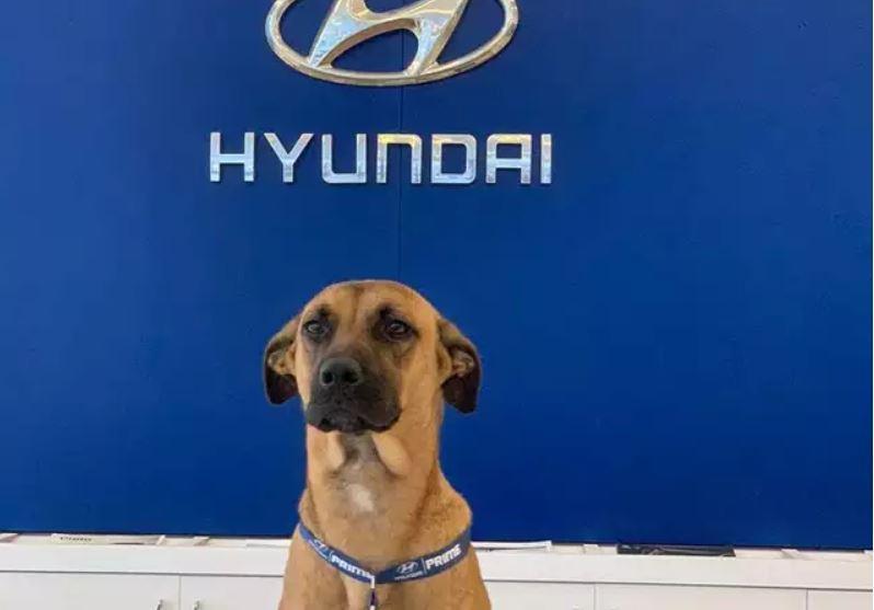 Jutawan anjing jalanan: Temui karyawan Hyundai Brazil tahun ini