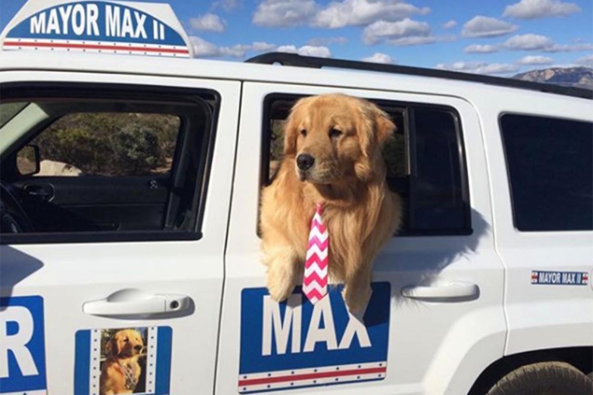 Seekor anjing telah menjadi walikota kota California ini selama 8 tahun