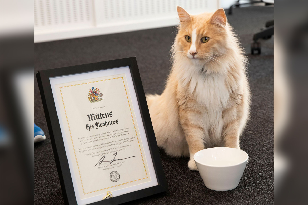Temui Mittens, kucing yang mencalonkan diri sebagai Selandia Baru Tahun Ini